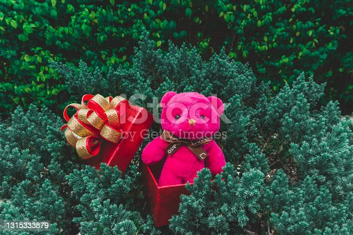 istock A pink Teddy bear standing in red gift box with golden ribbon put on green leaves of small pine tree for celebrate Christmas and happy new year 1315333879