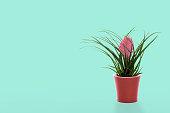 Pink tillandsia in a pot