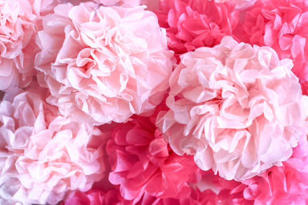 Pink Tissue Paper Pom Poms Background stock photo