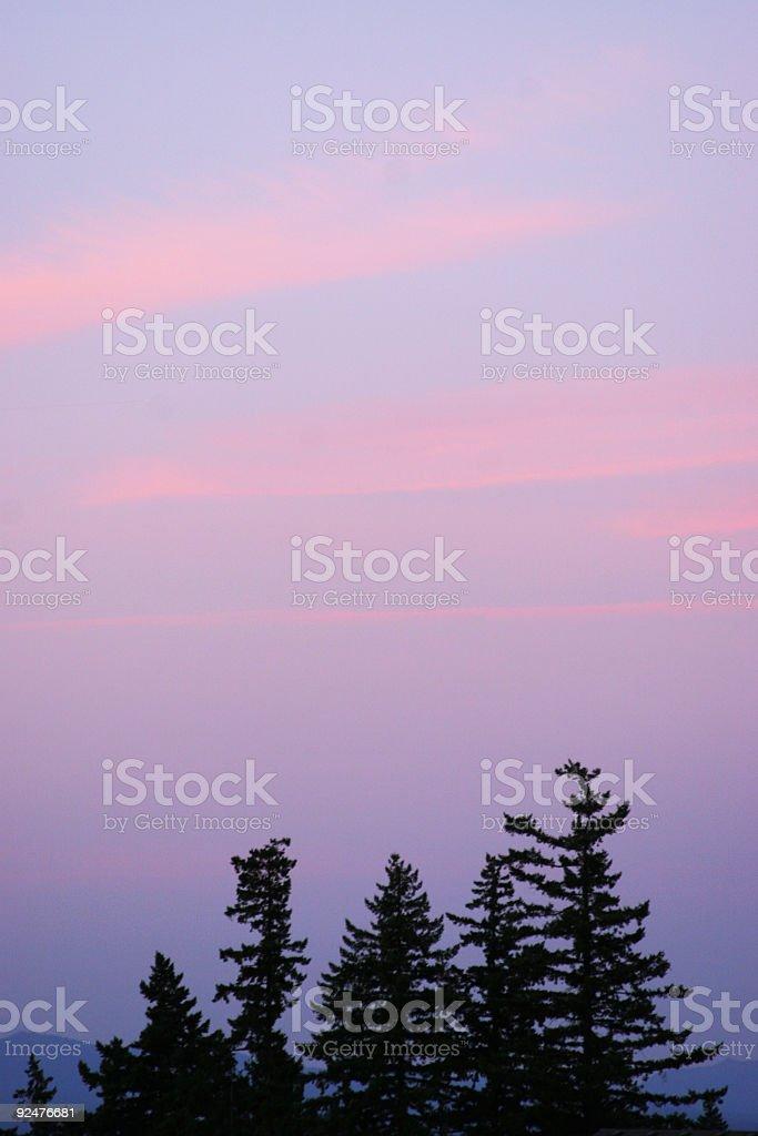 Pink Tree Skyline royalty-free stock photo