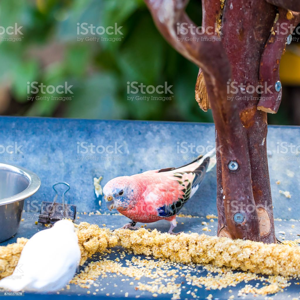 pembe tropik kuş stok fotoğrafı