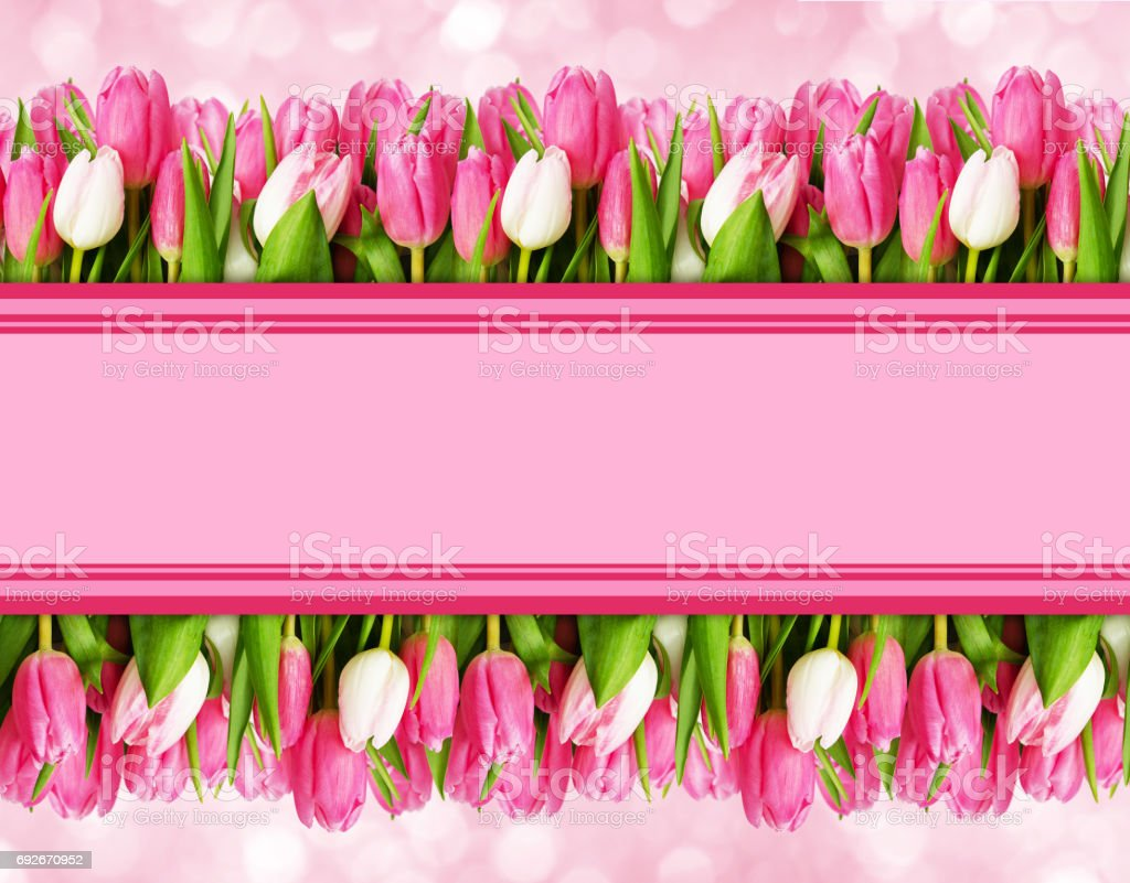 Pink Tulip Flowers Borders And Space For Text Stock Photo More
