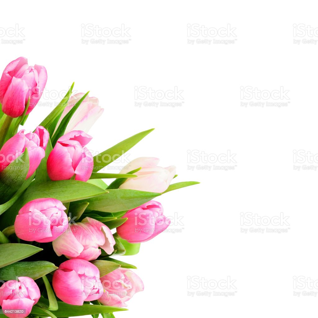 Pink Tulip Flowers Bouquet In A Corner Stock Photo More Pictures