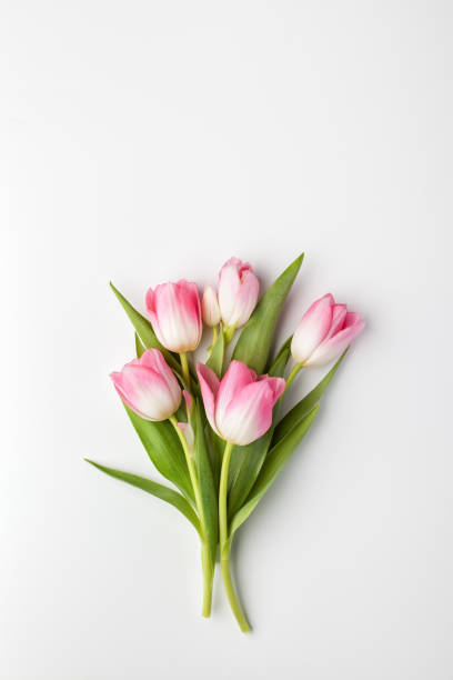 Pink tulip flowers bouquet on white background. stock photo