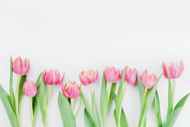 pink tulip flowers for spring background top view in flat lay style. womans or mothers day greeting card. - welcome march stock photos and pictures