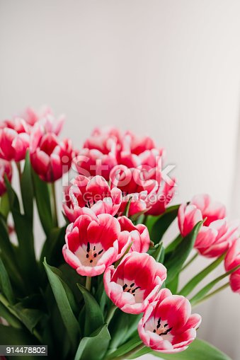 659293084istockphoto Pink tulip flowers for spring background top view in flat lay style. Womans or Mothers Day greeting card 914478802