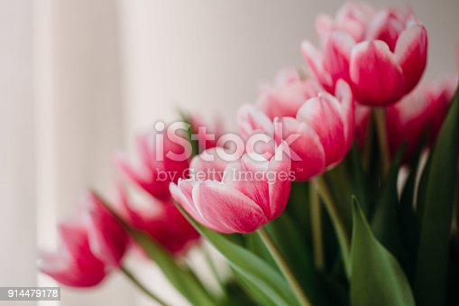 659293084 istock photo Pink tulip flowers for spring background top view in flat lay style. Womans or Mothers Day greeting card 914479178