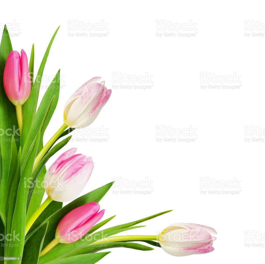 Pink Tulip Flowers In A Corner Arrangement Stock Photo More