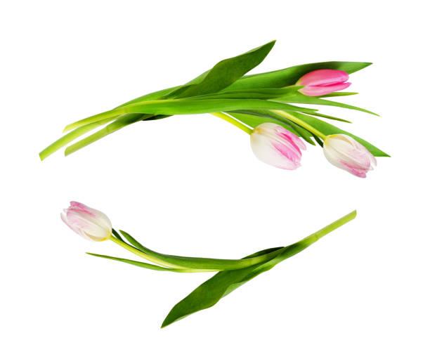 tulipe rose fleurs dans des arrangements de vague - damas en matière textile photos et images de collection