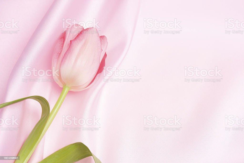 Pink Tulip On Satin royalty-free stock photo