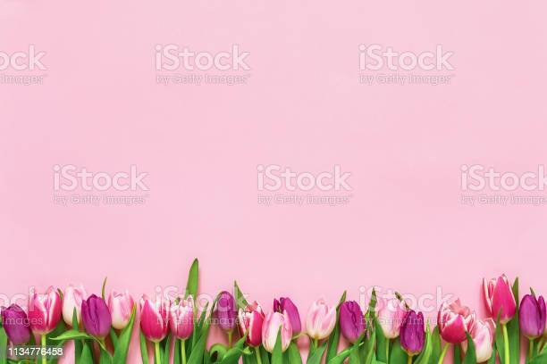 Pink tulips border on pink background copy space top view holiday picture id1134776458?b=1&k=6&m=1134776458&s=612x612&h=prrksewjf3wace8nm sagbf2zv050ar95qevklirhsg=