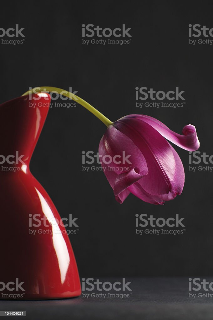 pink tulips in a vase royalty-free stock photo