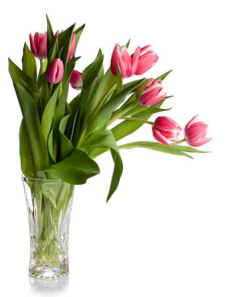 Pink tulips in glass vase on white picture id157194163?b=1&k=6&m=157194163&s=612x612&w=0&h=fwavk8hhvrhugedavkbbrf837o43g4lio2hlhtvpdtg=