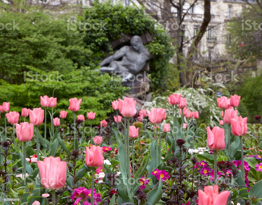 Pink tulips in the park of Paris stock photo