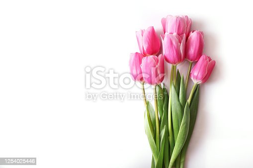 Pink tulips isolated on white background. Top view