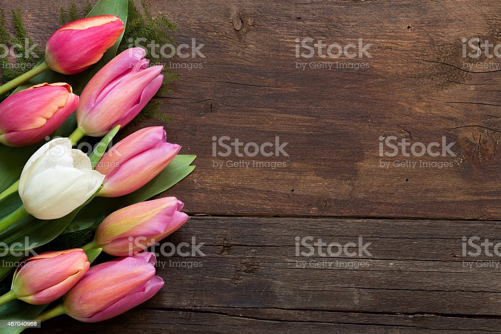 Pink tulips on dark wood background stock photo