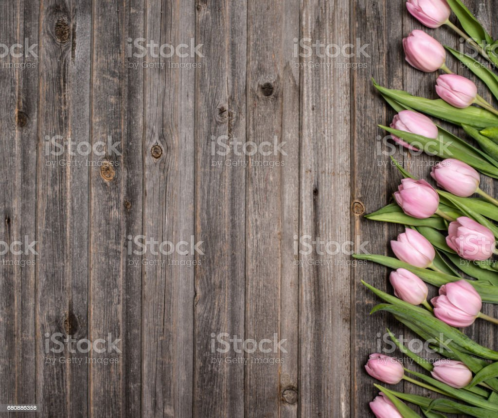 Pink tulips on old weathered wooden background. Spring flowers card with copy space for holiday text, vintage style. royalty-free stock photo