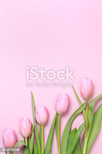 istock Pink tulips on the pink background. Flat lay, top view.  Valentines background. 910575036