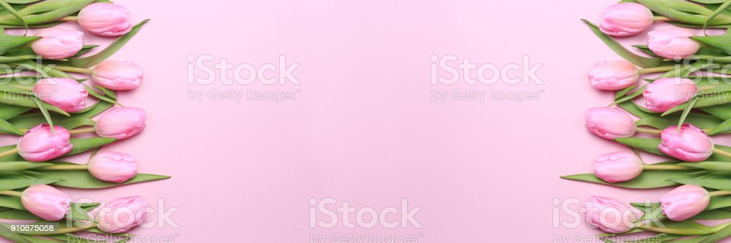 Pink tulips on the pink background. Flat lay, top view. Valentines...