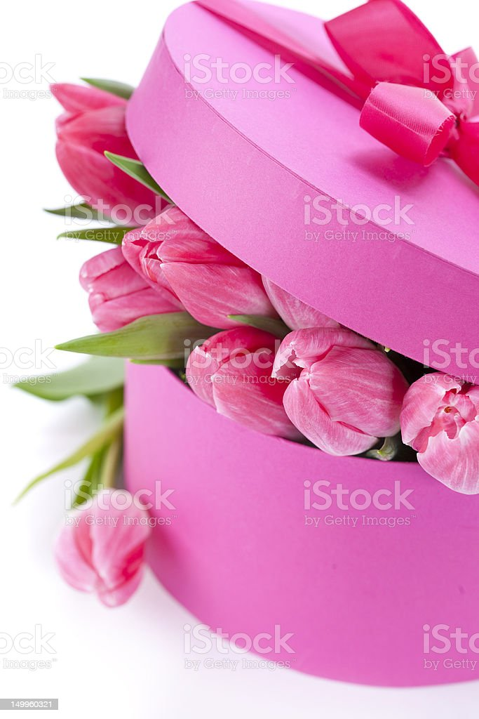 Pink tulips royalty-free stock photo