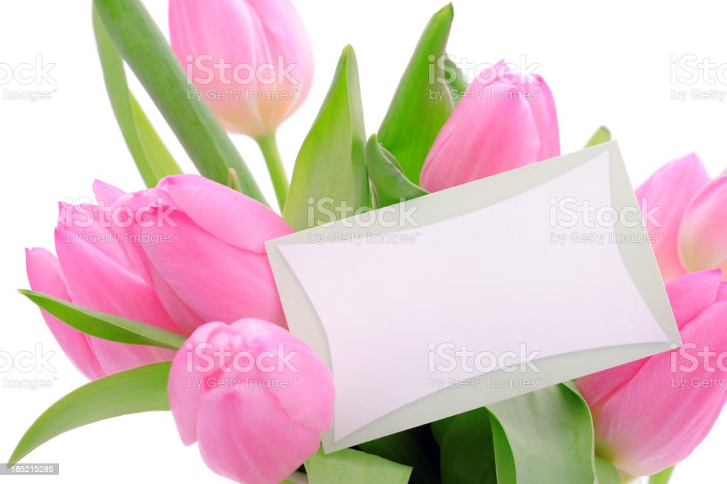 Pink tulips with an empty card royalty-free stock photo