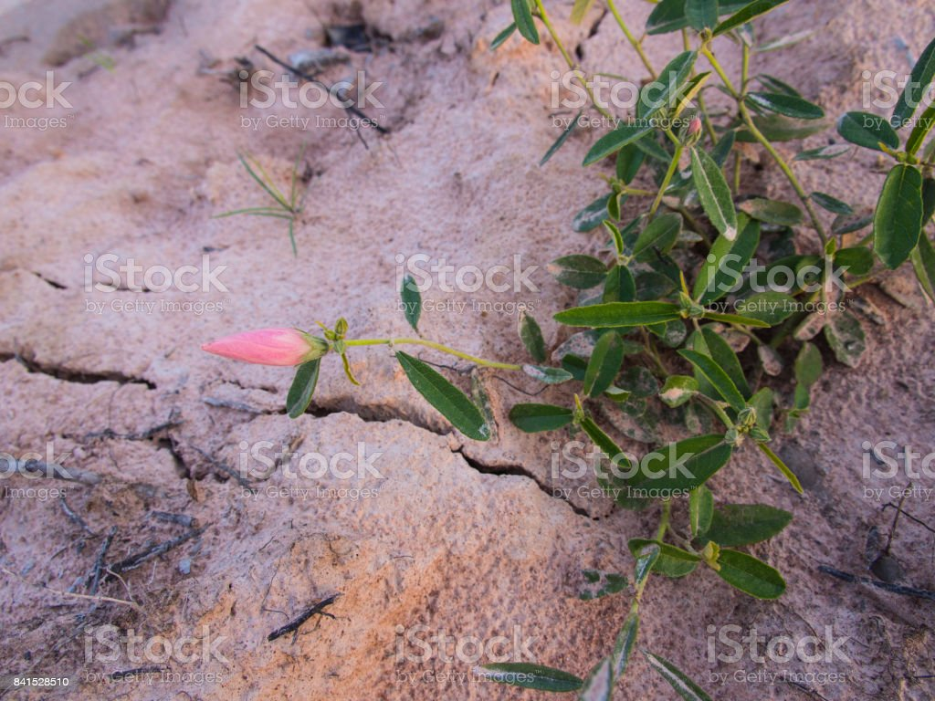Pink Unwanted Flora Flower Blooming stock photo