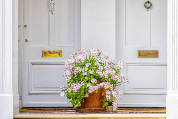 Pink white color geranium flower basket box potted pot decoration in summer by doorstep porch of doors with mail slots and knob knockers in Chelsea, London UK window stock photo