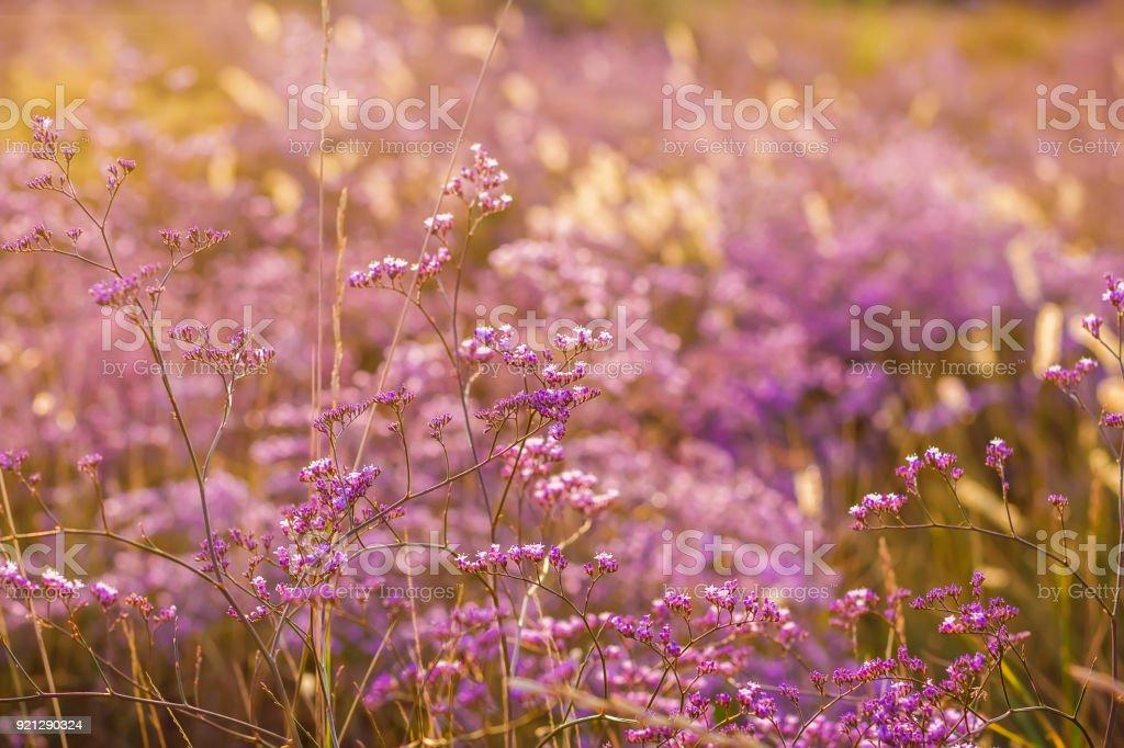 Pink wild flowers and sun light. stock photo