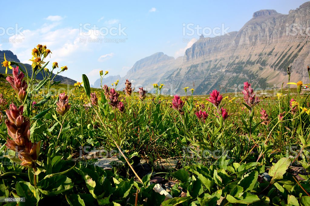 Pink Wildflowers and Mountians stock photo