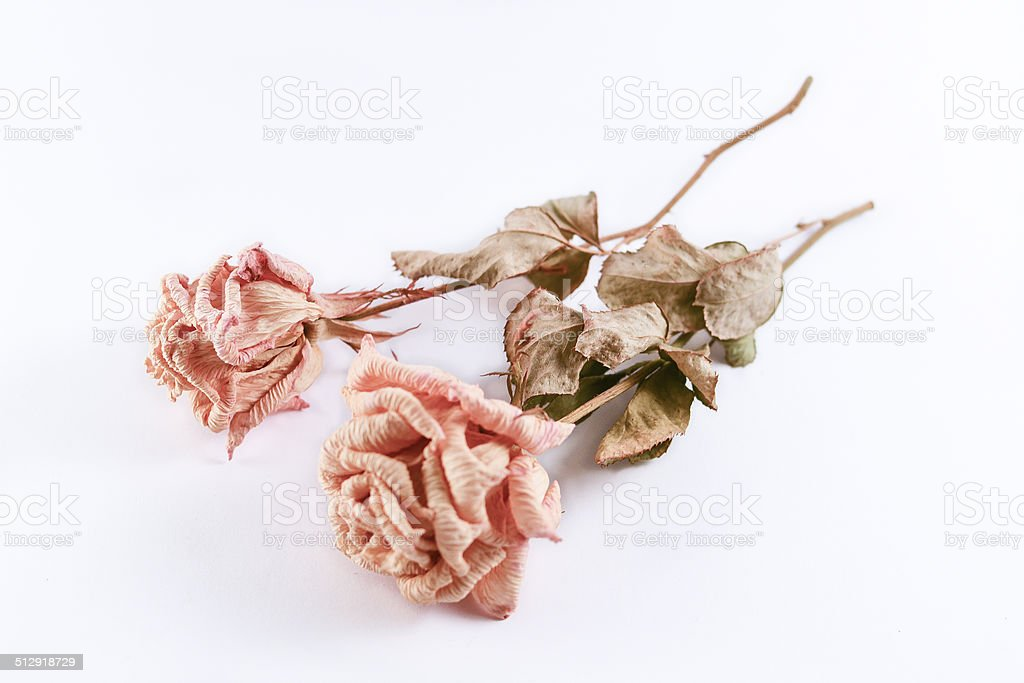 Pink withered roses on a white background stock photo