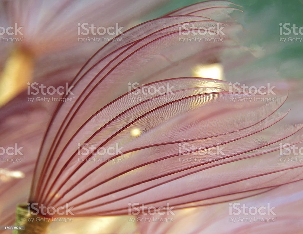 Pink Worm stock photo