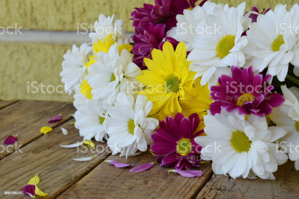 Pink, yellow and white chamomile flowers. Birthday, Mother\'s day,...