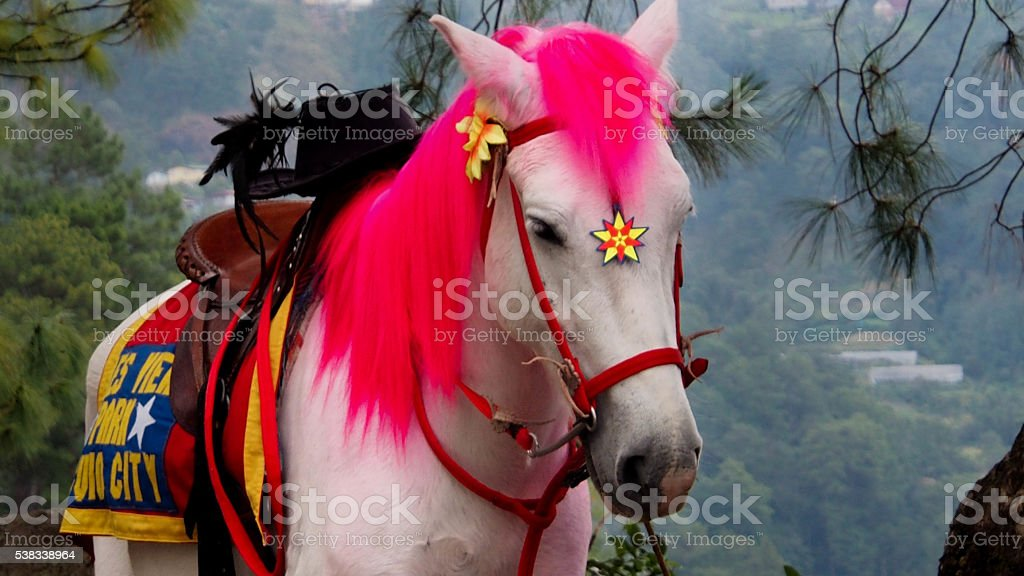 Pink-Haired Horse stock photo