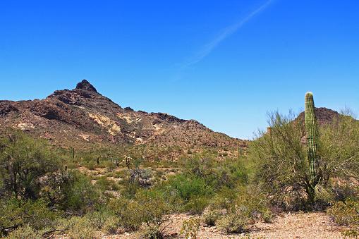 istock Pinkley Peak in Organ Pipe Cactus National Monument 807168644
