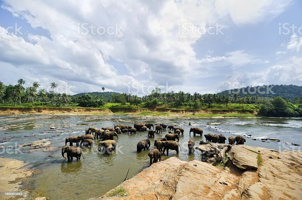 Pinnawela Elephant Orphanage - Sri Lanka stock photo