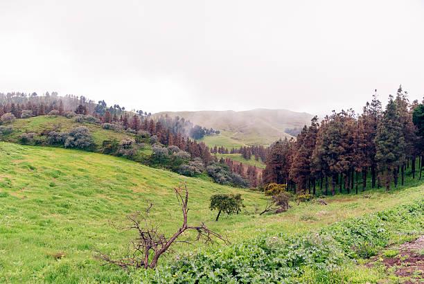 Pinos de Gáldar stock photo