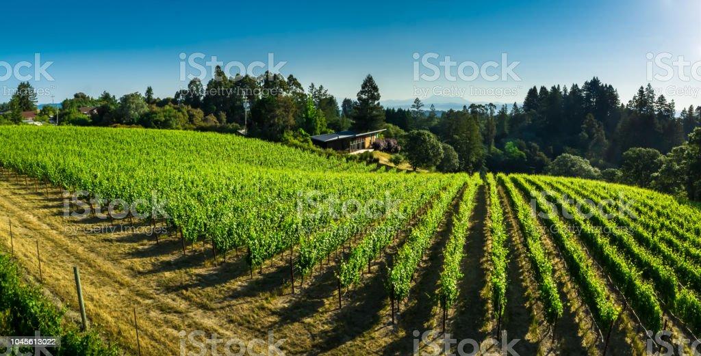 Pinot Noir Vineyard in Sonoma County, CA - Aerial Shot stock photo