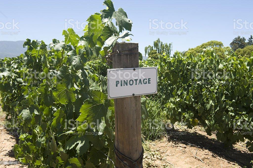 Pinotage Winnica w Republice Południowej Afryki - Zbiór zdjęć royalty-free (Bez ludzi)