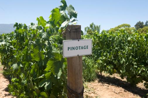 Pinotage Winnica W Republice Południowej Afryki - zdjęcia stockowe i więcej obrazów Bez ludzi