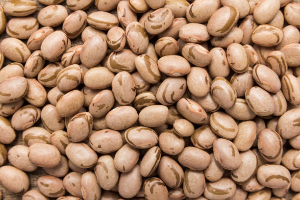 pinto bean legume. closeup of grains, background use. - bean stock photos and pictures