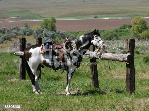 Black and white Pinto/Paint horse with western saddle tied to hitching post.