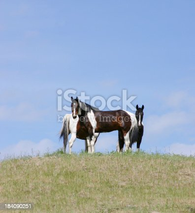 Three black and white pinto horses on hill with blue sky behind.