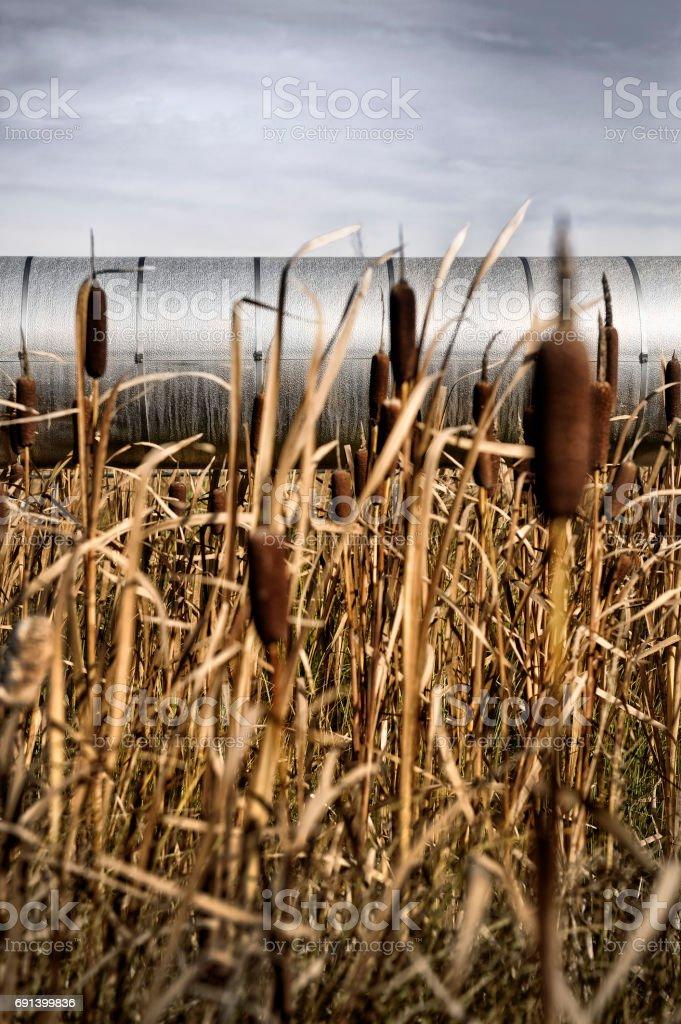 Pipeline running through Marshland stock photo