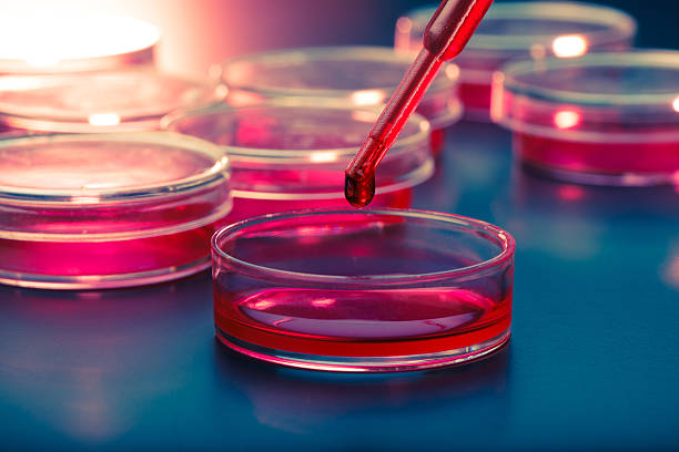 Pipette  and petri dishes stock photo