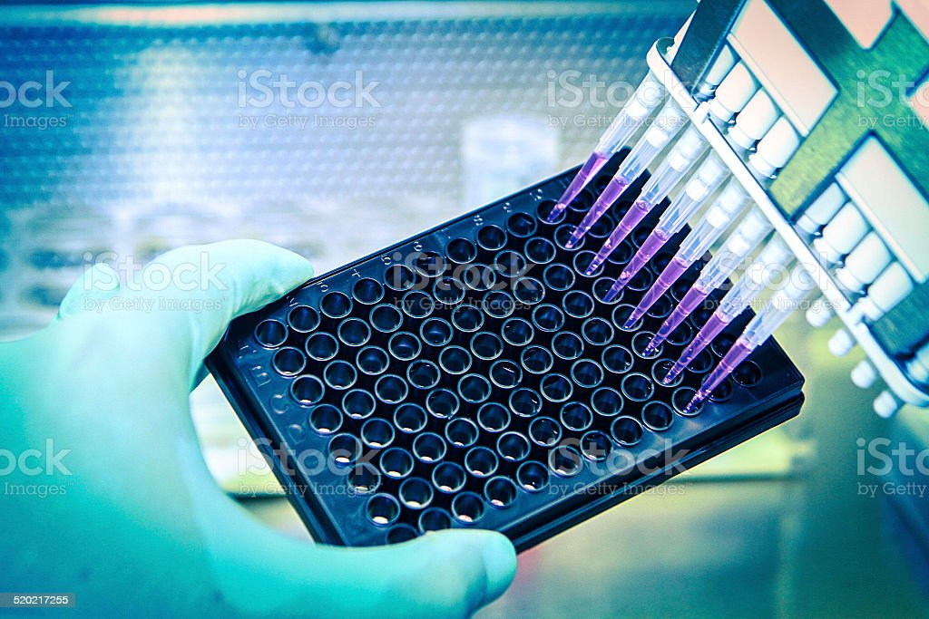 Pipette With Cell Culture Plate stock photo