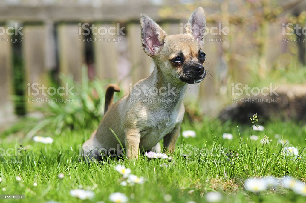Pipi on the grass stock photo