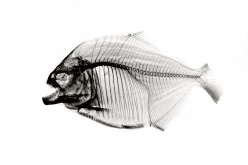 Inverted x-ray skeleton on white.