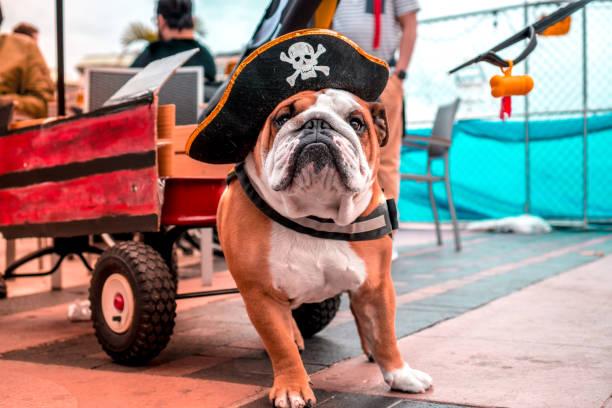Piraten-Hund – Foto