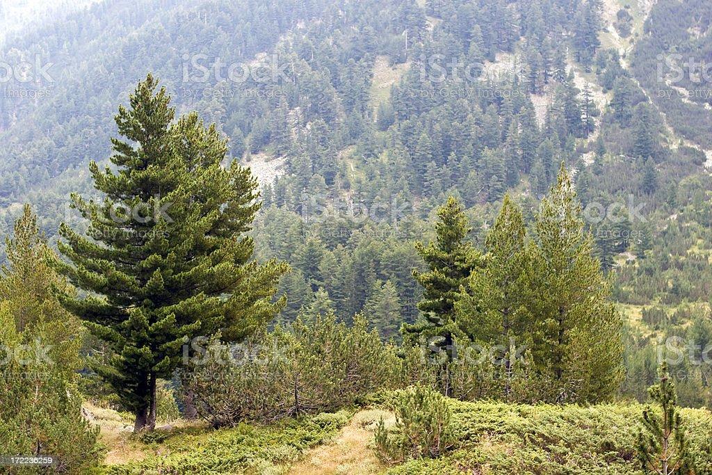 Pirin Mountain royalty-free stock photo