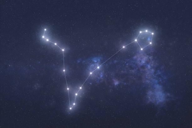 balık takımyıldızı dış uzayda - boğa hayvan stok fotoğraflar ve resimler